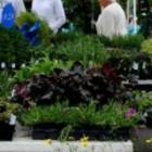Date Set for Owasso Bouquet of Gardeners Spring Garden Show