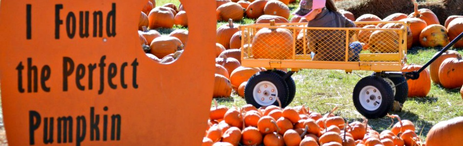 Fumc pumpkin patch returns for 15th year in owasso for Acapulco golden tans salon owasso ok