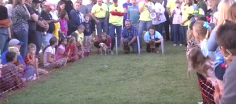 Gathering on main weiner dog races october 6 for Acapulco golden tans salon owasso ok
