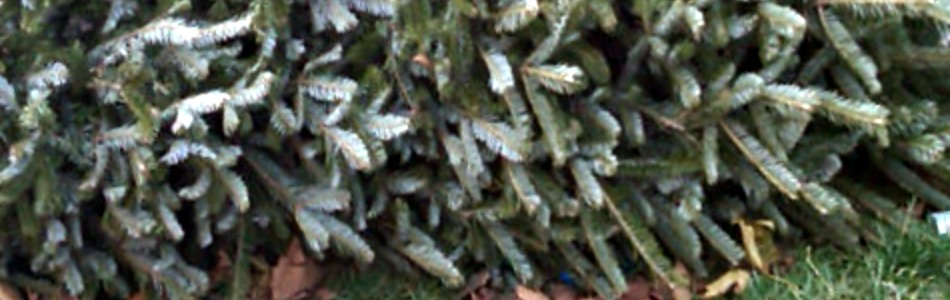 Owasso live holiday greenery pickup service schedule for Acapulco golden tans salon owasso ok
