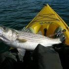 Next Oklahoma Striped Bass Association Meeting February 20th