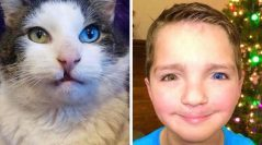 Not Your Ordinary Cat – Not Your Ordinary Kid –  A Minnesota Cat Meant to Be in Owasso