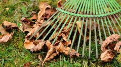 "City of Owasso has announced ""Free Yard Waste Disposal Month"" for all of November"