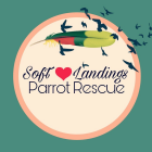 BUNCO for a Cause – Soft Landings Parrot Rescue