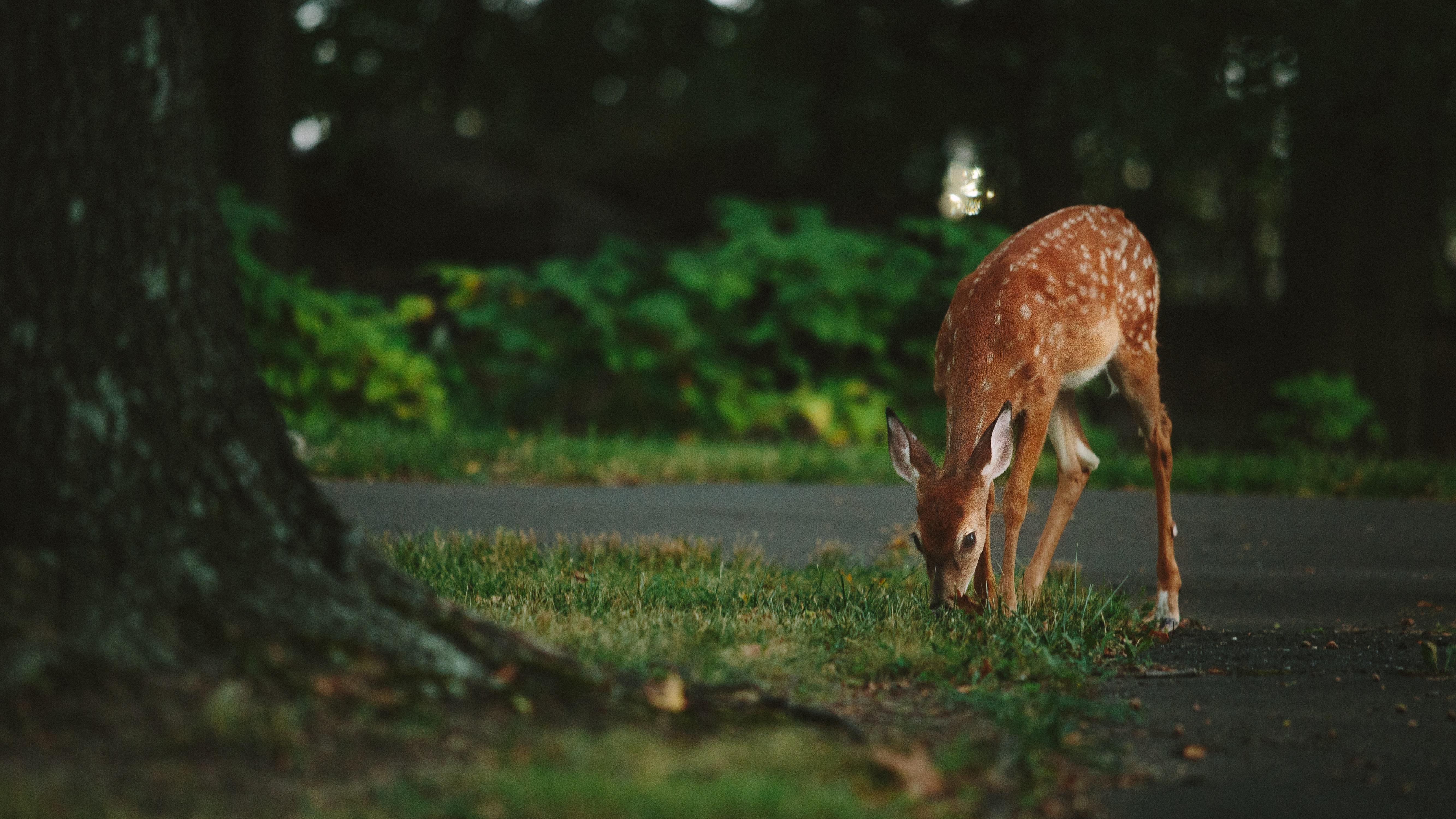 Deer oh Deer!  October Mean Increase in Auto/Deer Accidents