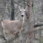 State's Most-Popular Deer Hunting Season Will Open Nov. 23